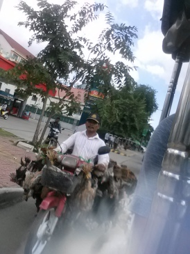 We also saw the chicken guy in Phnom Penh - here's a close up of what Tyler and Kevin also saw from the road.