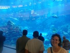 an aquarium in a mall