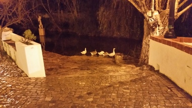 ducks at the fonte pequena (small spring)