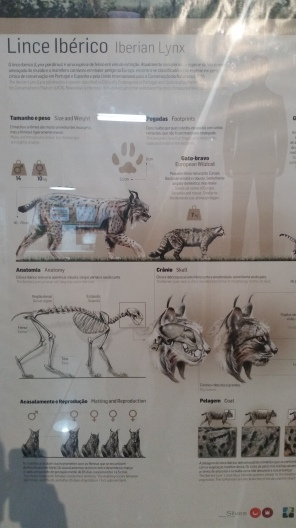 diagrams of the endangered Iberian Lynx