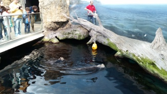 then we moved onto otters, just in time for their feeding