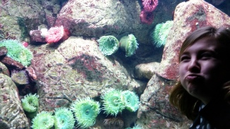 can you spot the blowfish?