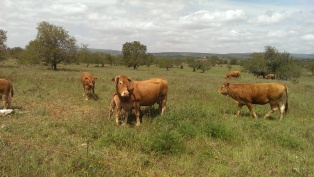 cows on the roadside, just normal stuff
