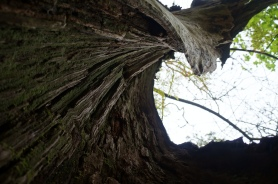 old tree is empty