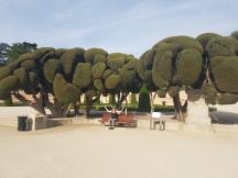 Cool trees in Retiro Park!