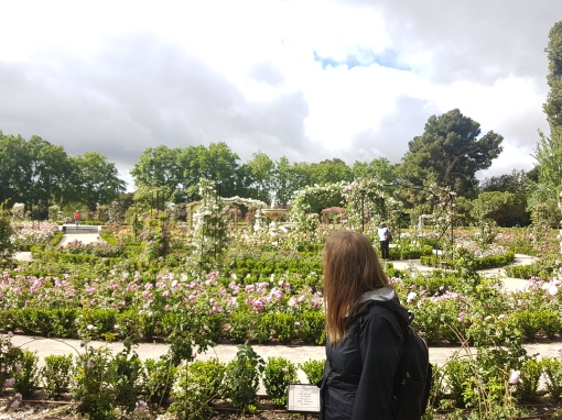 A rose garden in Retiro Park.