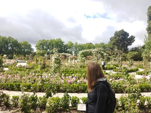 A rose garden in Retiro Park.