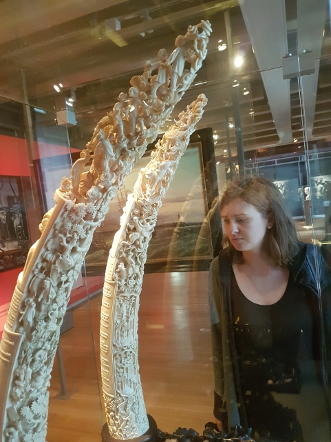 an absurbly extravagant animal tusk, courtesy of colonialism