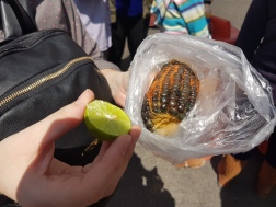 Quick break to try a snack of blue corn. Covered in chilli powder and lime juice!
